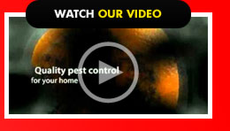 Watch our Video - Amarillo Pest Service, Amarillo Pest Control, Panhandle Pest Service, Amarillo Bug Control, Amarillo Mice Control, Amarillo Rodent Control, Amarillo Residential Exterminator, Amarillo Commercial Exterminator
